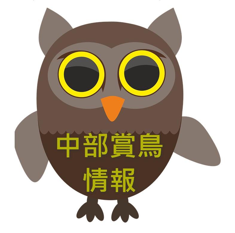 中部賞鳥情報