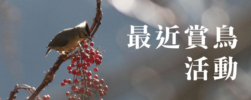 最近賞鳥活動